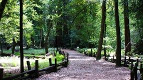 Caminata en el bosque Foto de archivo libre de regalías