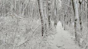 Caminata en el bosque del invierno Imágenes de archivo libres de regalías