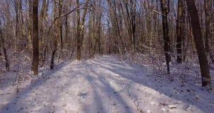 Caminata en el bosque del invierno almacen de metraje de vídeo