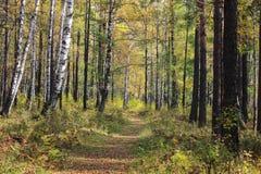 Caminata en el bosque del otoño Fotos de archivo libres de regalías
