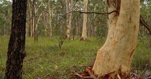 Caminata en el Forrest Imagenes de archivo