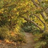 Caminata en el parque Imagen de archivo libre de regalías