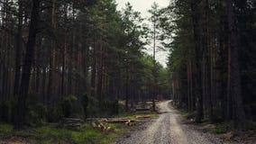 Caminata en las maderas fotos de archivo libres de regalías