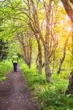 Caminata en las maderas Imagen de archivo