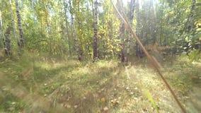Caminata en las maderas almacen de video
