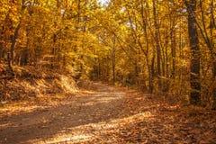 Caminata en las maderas Fotografía de archivo