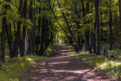 Caminata en las maderas Imagen de archivo libre de regalías