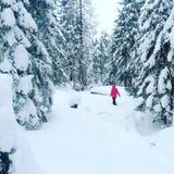 Caminata en maderas Fotografía de archivo libre de regalías