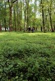 Caminata en parque verde. Foto de archivo libre de regalías