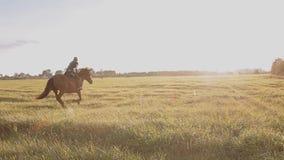 Caminata en un caballo la niña está montando un caballo metrajes