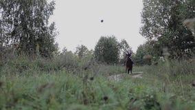 Caminata en un caballo la niña está montando un caballo almacen de video