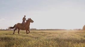Caminata en un caballo la niña está montando un caballo almacen de metraje de vídeo