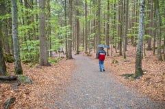 Caminata lluviosa del bosque Foto de archivo libre de regalías