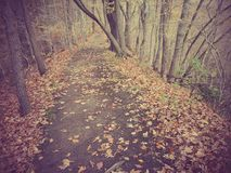 Caminata a través de las maderas Foto de archivo libre de regalías