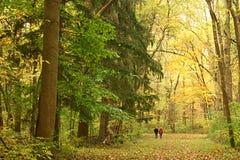 Caminata a través de un bosque del otoño fotos de archivo
