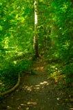 Caminata a través del bosque Imagen de archivo
