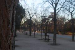 Caminata a través del parque fotografía de archivo