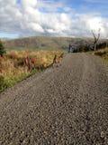caminatas Imagen de archivo