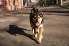 Camine con un perro en un día de primavera caliente Fotos de archivo