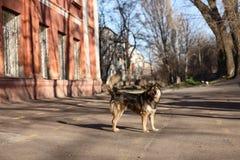 Camine con un perro en un día de primavera caliente Fotografía de archivo libre de regalías