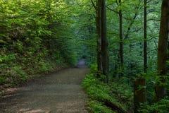 Camine en el bosque, naturaleza pura, Tatras del oeste, Eslovaquia Foto de archivo libre de regalías