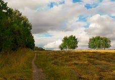 Camine en el campo entre campos y día agradable del otoño del abedul Fotos de archivo