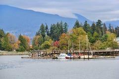 Camine en el puerto del carbón que goza de Autumn Color, fauna, centro de la ciudad, Vancouver, Columbia Británica Fotos de archivo libres de regalías