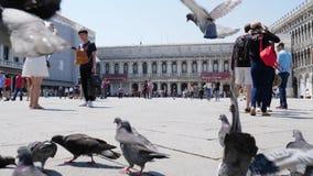 Camine en Europa, muchas palomas van y las moscas entre gente de los transeúntes en marcas del St ajustan almacen de video