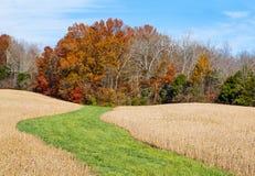 Camine en otoño Imagen de archivo