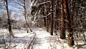 Camine a lo largo de la trayectoria en el tiro estabilizado bosque nevoso del pov del cardán Día asoleado almacen de metraje de vídeo