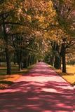 Camine a lo largo del callejón soleado en el parque Fotografía de archivo libre de regalías