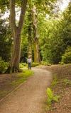 Camine a través del bosque en el priorato de Nostell, Wakefiled Imágenes de archivo libres de regalías