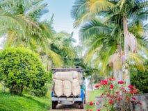 Caminhão do café na exploração agrícola do café em Colômbia foto de stock
