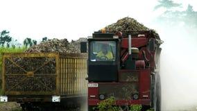 Caminhão do cana-de-açúcar video estoque