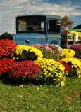 Caminhão e Mums antigos Fotografia de Stock Royalty Free