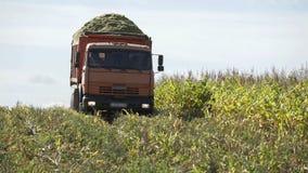 Caminhão que transfere o milho recentemente colhido Caminhão que move-se no campo agrícola Maquinaria agrícola em colher o ca filme