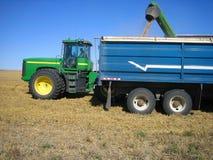 Caminhões do carregamento durante a colheita Fotografia de Stock Royalty Free