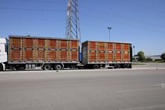 Caminhões vivos do transporte animal Fotografia de Stock