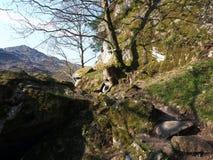 Caminhada à caverna de Rob Roy, Loch Lomond Imagem de Stock Royalty Free