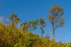 A caminhada à parte superior da montanha Foto de Stock