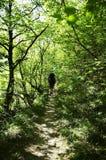 Caminhada Imagens de Stock Royalty Free