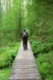 Caminhada Imagem de Stock