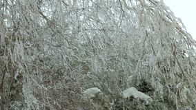 Caminhada alegre na neve vídeos de arquivo
