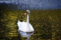 caminhada Alemanha da natureza Fotografia de Stock Royalty Free