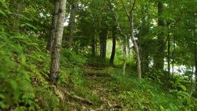 Caminhada ao longo de um caminho claro da floresta vídeos de arquivo