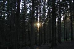 Caminhada através da floresta Imagens de Stock Royalty Free