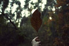 Caminhada através da floresta do outono foto de stock