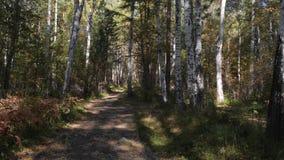 Caminhada através da floresta do outono video estoque