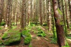 Caminhada através da floresta em Lofthus, Noruega foto de stock