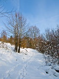Caminhada através da neve foto de stock